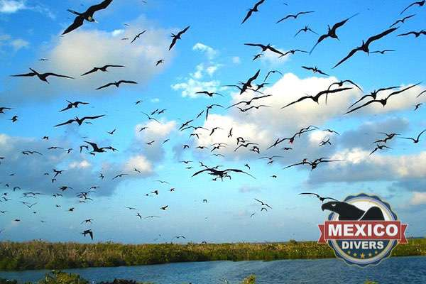 birds flying above contoy island tour