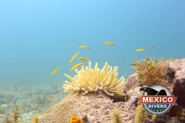 little fish at manchones reef