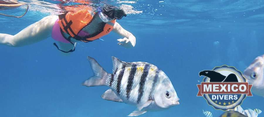 Snorkeling in Manchones and MUSA